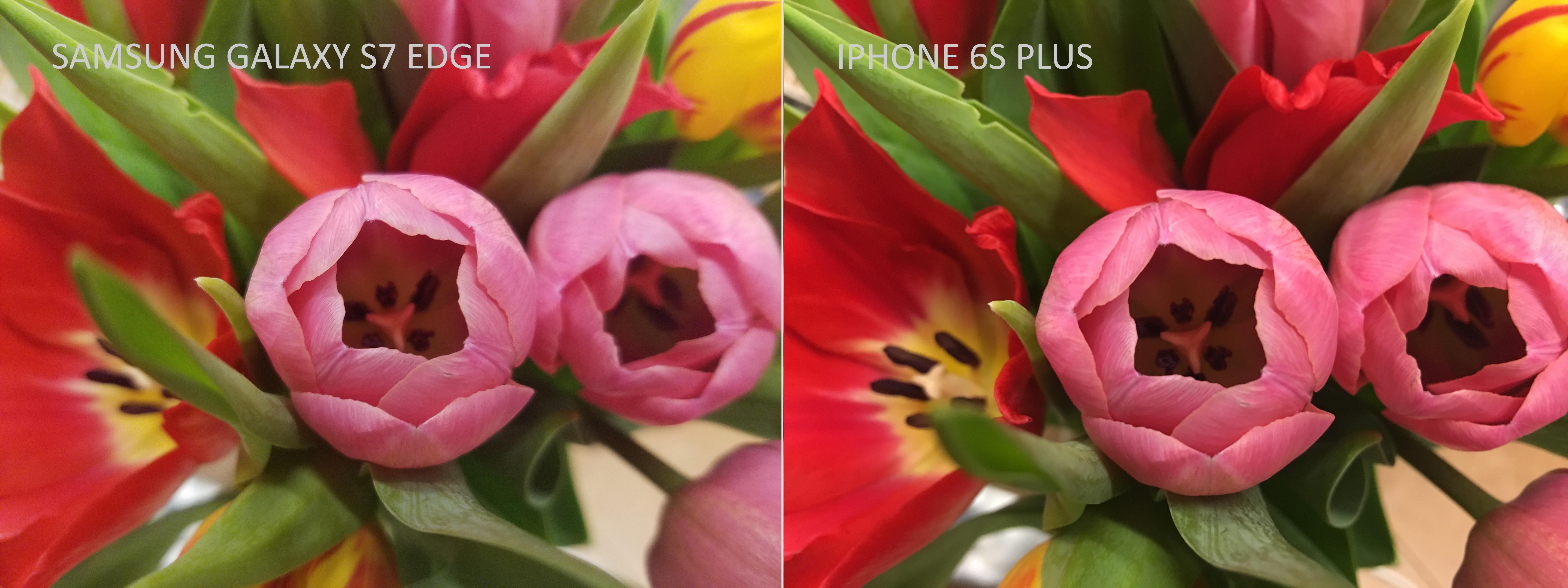 """iPhone 6s Plus кажется более """"цветным"""", зато из фото на Samsung GALAXY S7 Edge можно больше выжать в пост-обработке."""