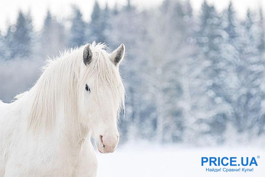 Сделать предложение на День всех влюбленных необычно: на белом коне