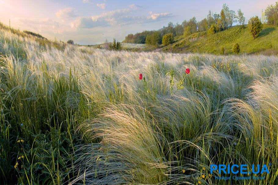 Лучшие 5 мест на Украине для весеннего путешествия. Аскания Нова