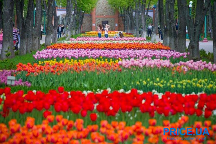 Лучшие 5 мест на Украине для весеннего путешествия. Кропивницкий дендропарк