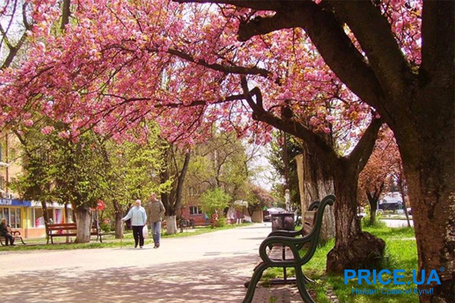 Лучшие 5 мест на Украине для весеннего путешествия. Ужгородское цветение сакуры