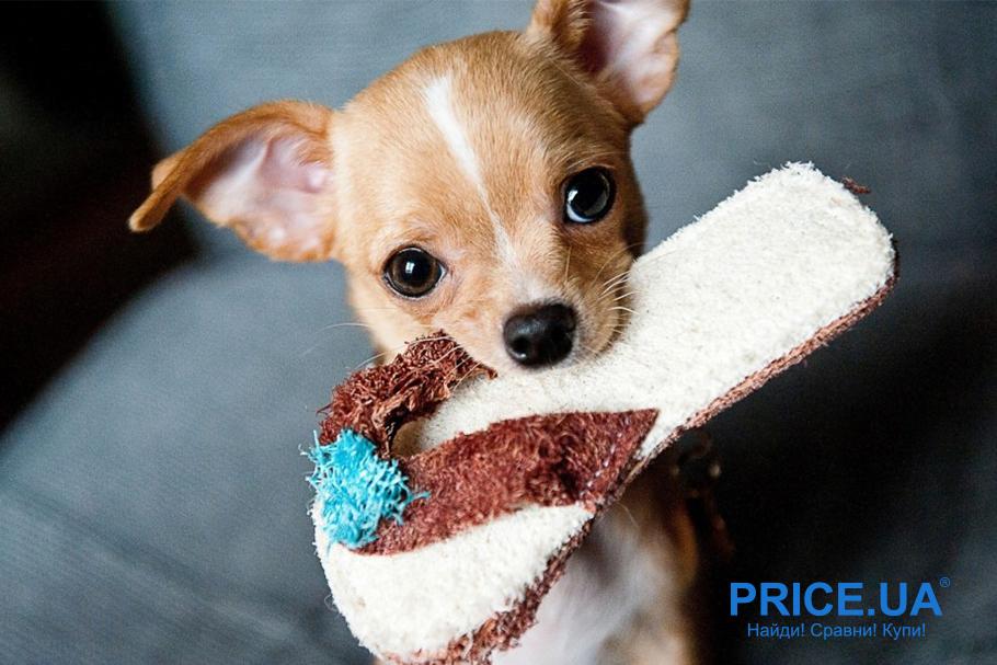 Поднимаем дух и веселье у вашей собаки: активности вместе