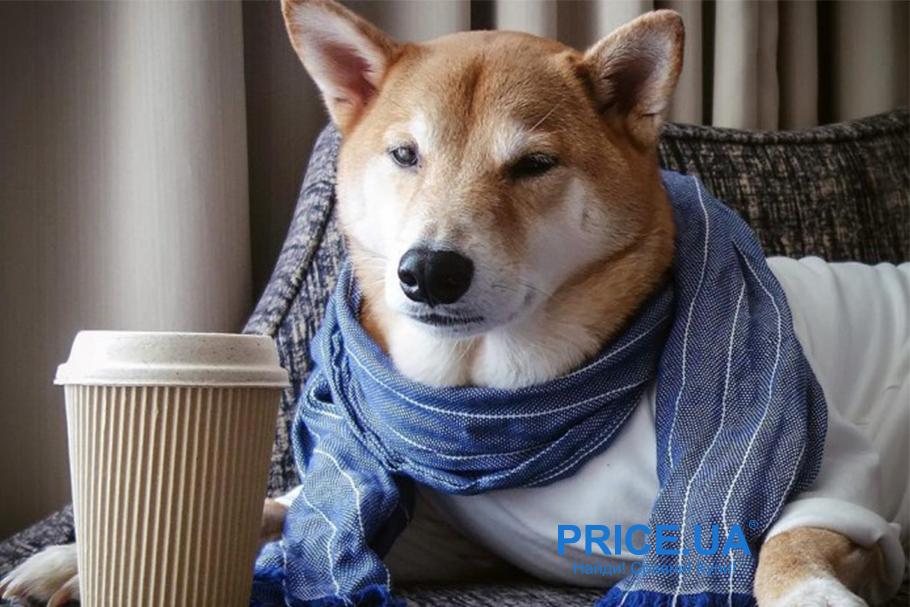Поднимаем дух и веселье у вашей собаки: разумная и полезная дрессура