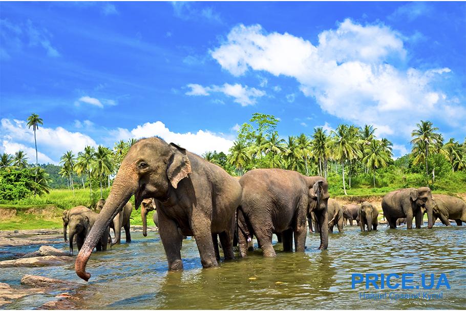 Тренды путешествий 2019. Шри-Ланка