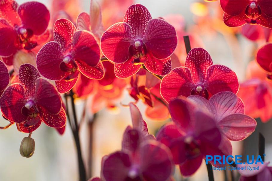 Ликбез по выбору цветов на 8 Марта. Ориентироваться в цветах в целом