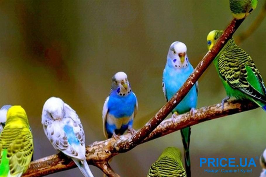 Как учить попугая говорить: самые обучаемые виды попугаев.