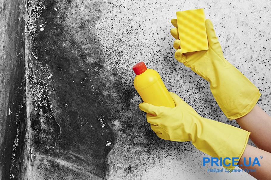 Как эффективно бороться с плесенью в доме