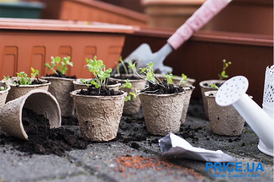Руководство по выращиванию рассады.