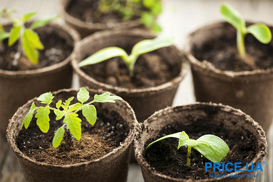 Руководство по выращиванию рассады. Выбираем грунт