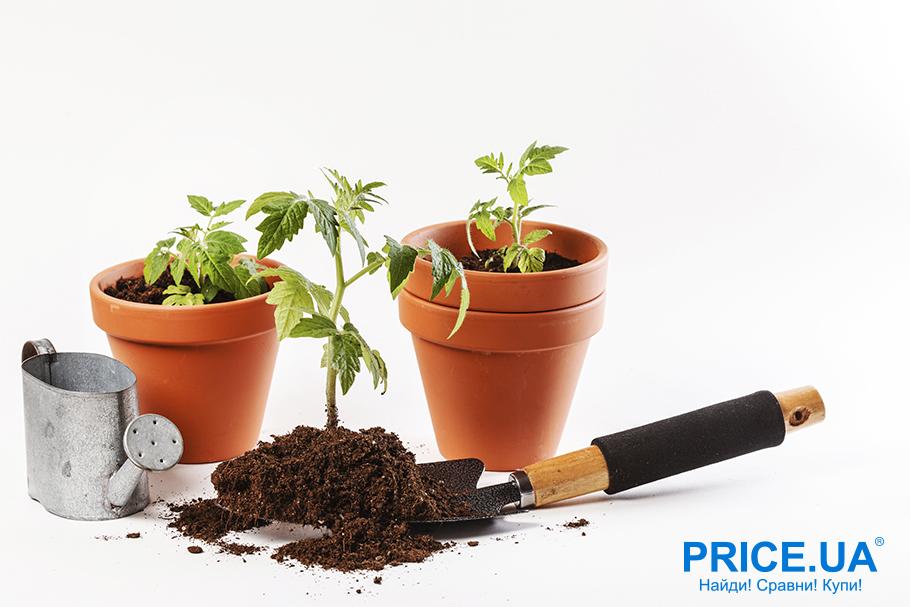 Руководство по выращиванию рассады. Правила посадки семян