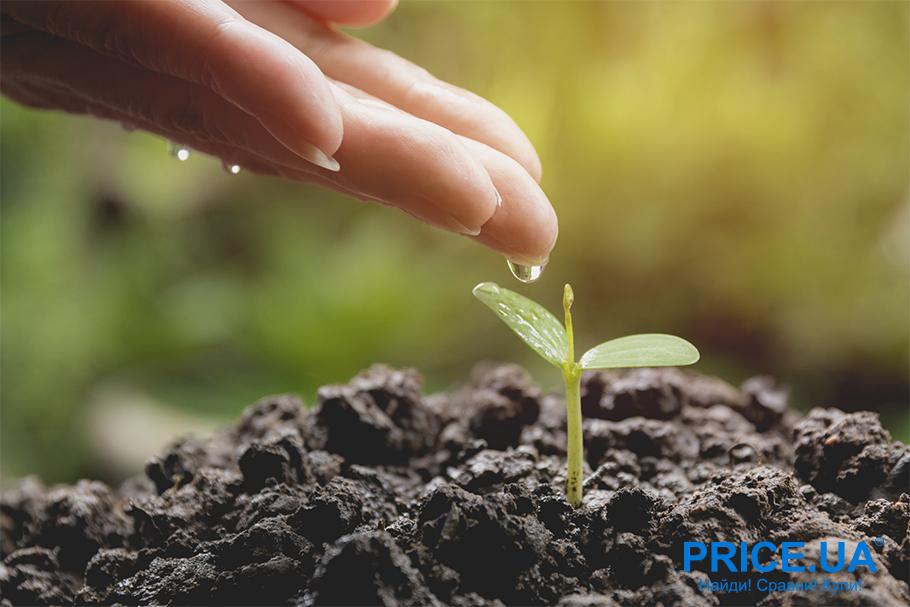 Руководство по выращиванию рассады. Как ухаживать по правилам