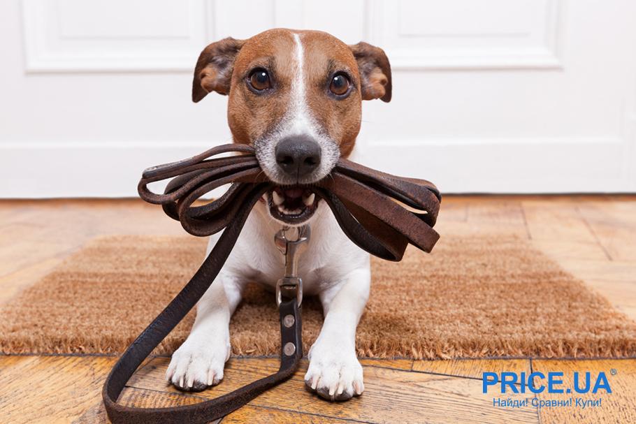 Секреты правильного выгула собаки. Как часто?