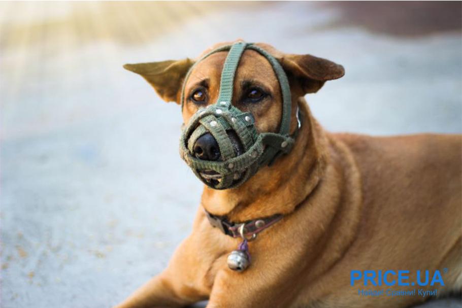 Секреты правильного выгула собаки. Приучайте к наморднику