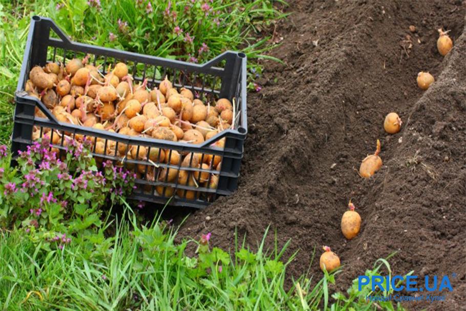 Миссия: посадить картошку быстро. Советы