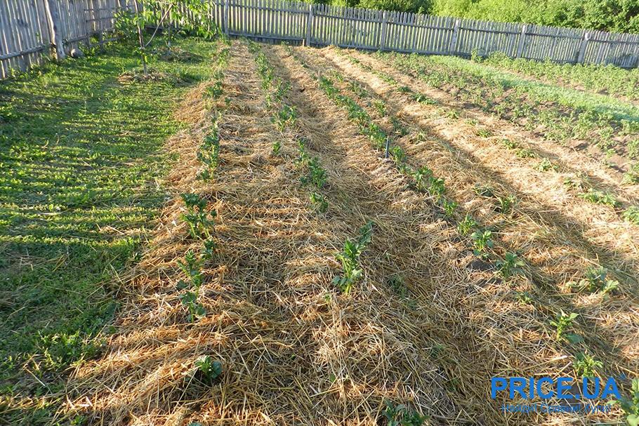 Миссия: посадить картошку быстро. Необычные методы