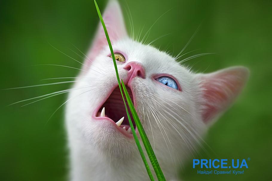 Выбрать витамины для кошек - советы