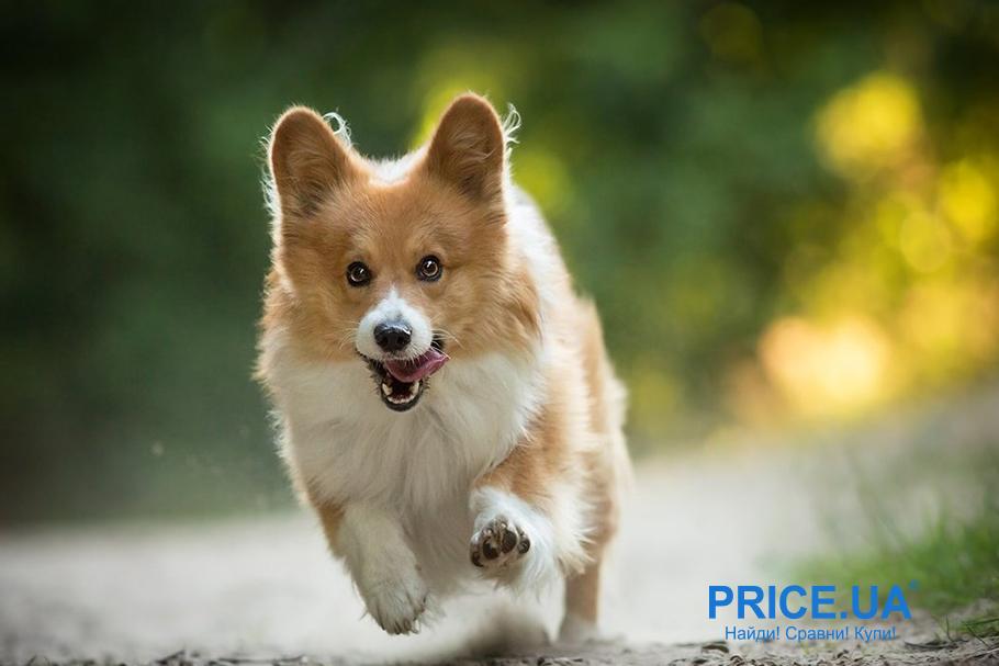 Выбрать витамины для собак - советы