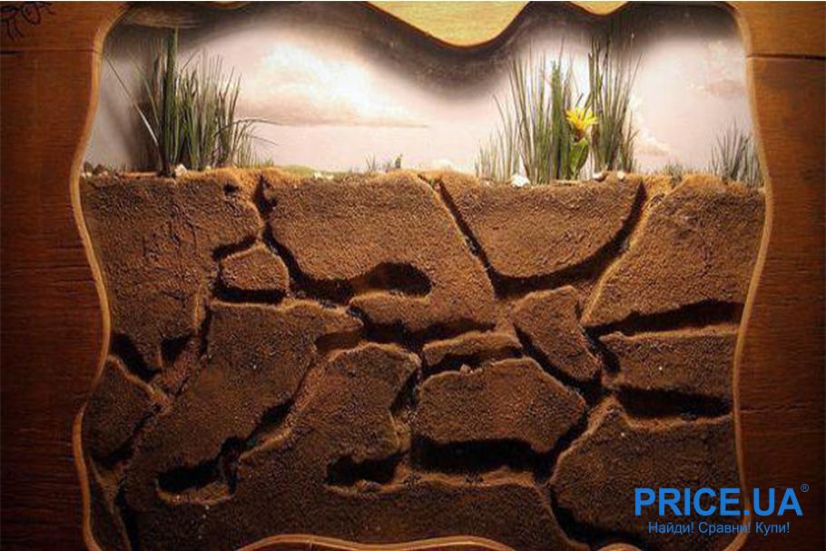 Как правильно выбрать муравьиную ферму? Грунтовый наполнитель