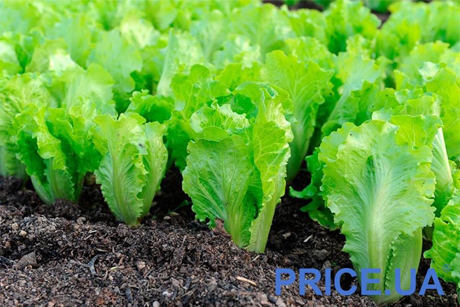 Самые эффектные и полезные растения для дачи. Миксы салатов