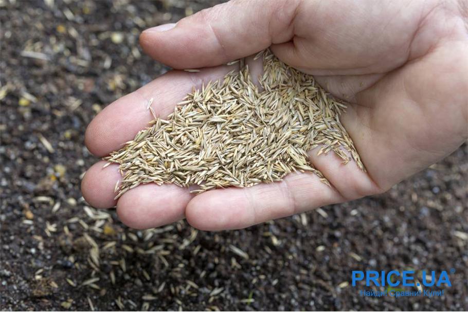 Идеальная лужайка: подбор семян и правила посева