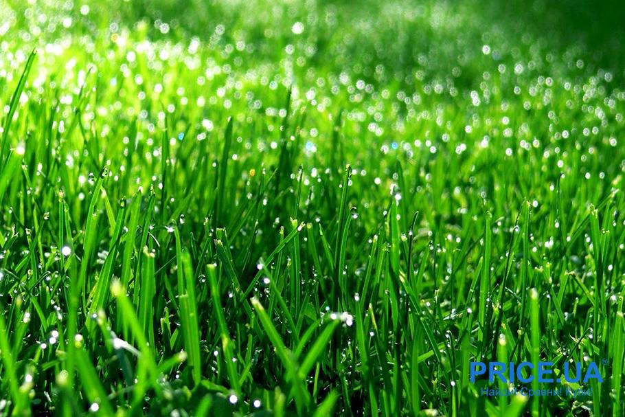 Идеальная лужайка: подготовка почвы