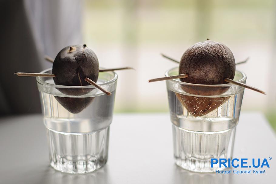 Как вырастить авокадо из косточки: проращиваем косточку