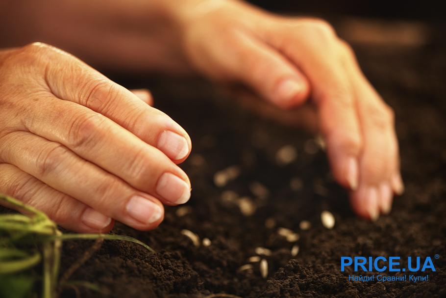 Удобрение земли: посев сидератов