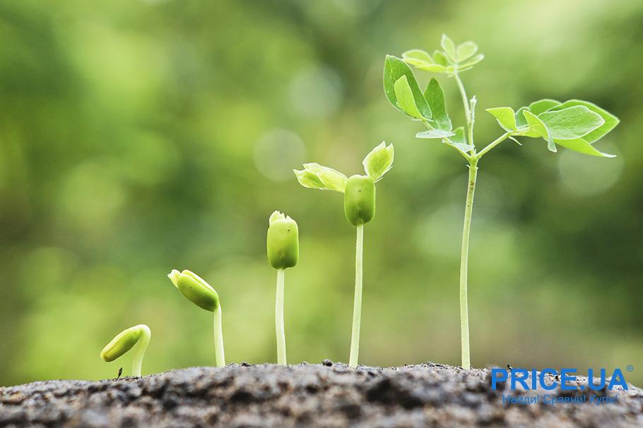 Удобрение земли: базовые элементы