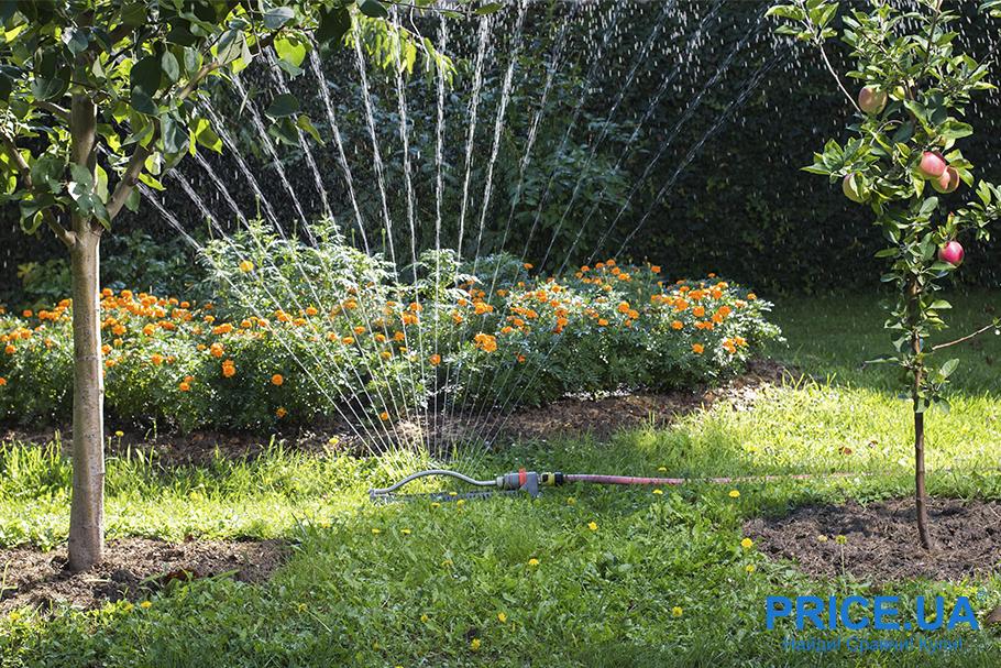 20 садовых и огородных дел августа. Полив плодоносящих деревьев