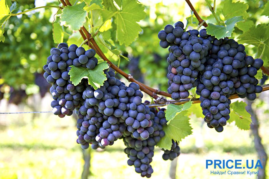20 садовых и огородных дел августа. Виноград