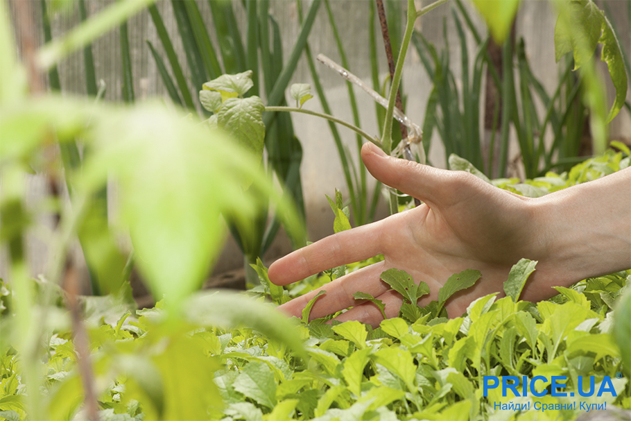 20 садовых и огородных дел августа. Сидераты