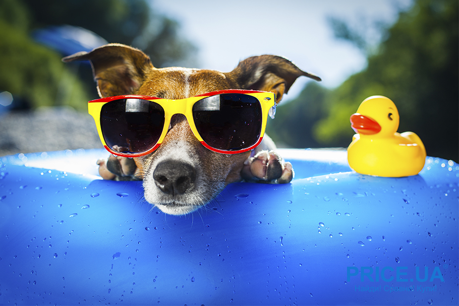 С собакой в путешествие: что нужно учесть. Если едете за границу