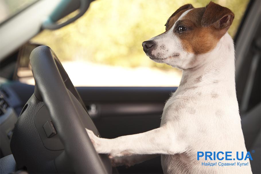 С собакой в путешествие: что нужно учесть. Если предстоит ехать автомобилем