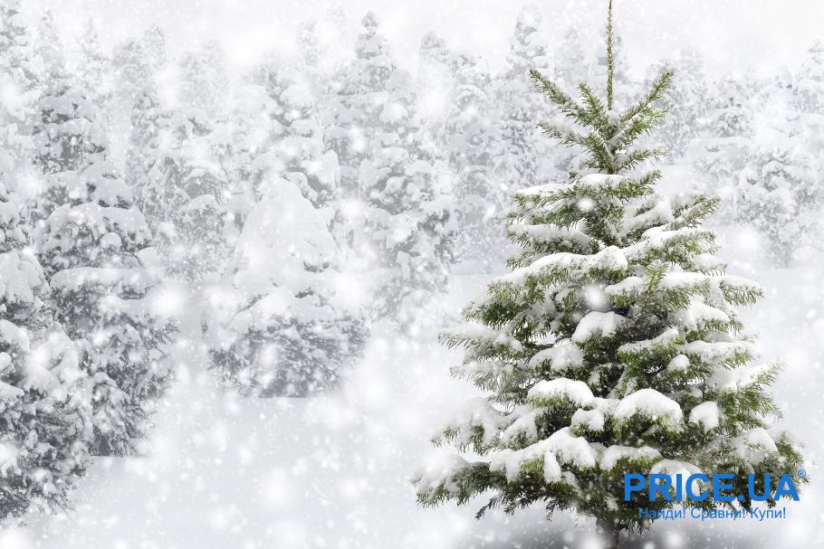 Живая елка или исскуственная - какая лучше? Мифы о елях