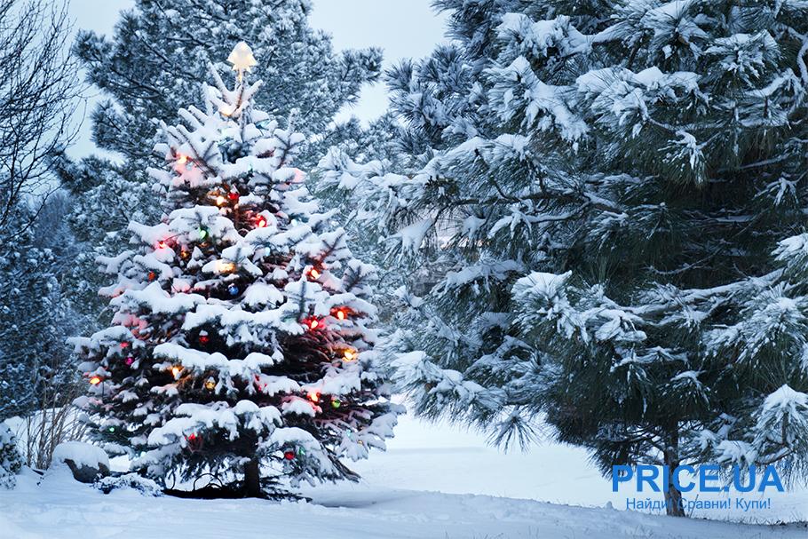 Живая елка или исскуственная - какая лучше? Плюсы натуральной елки
