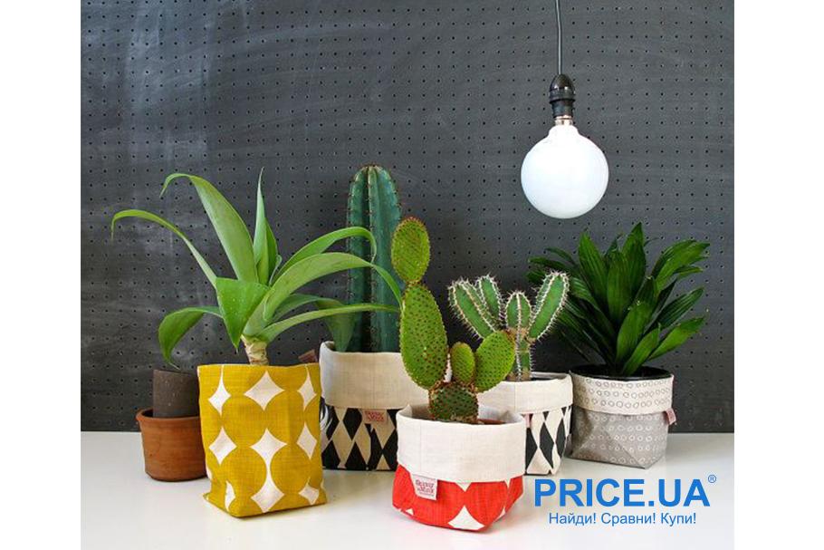 Освежаем обстановку квартиры на карантине. Цветы и растения