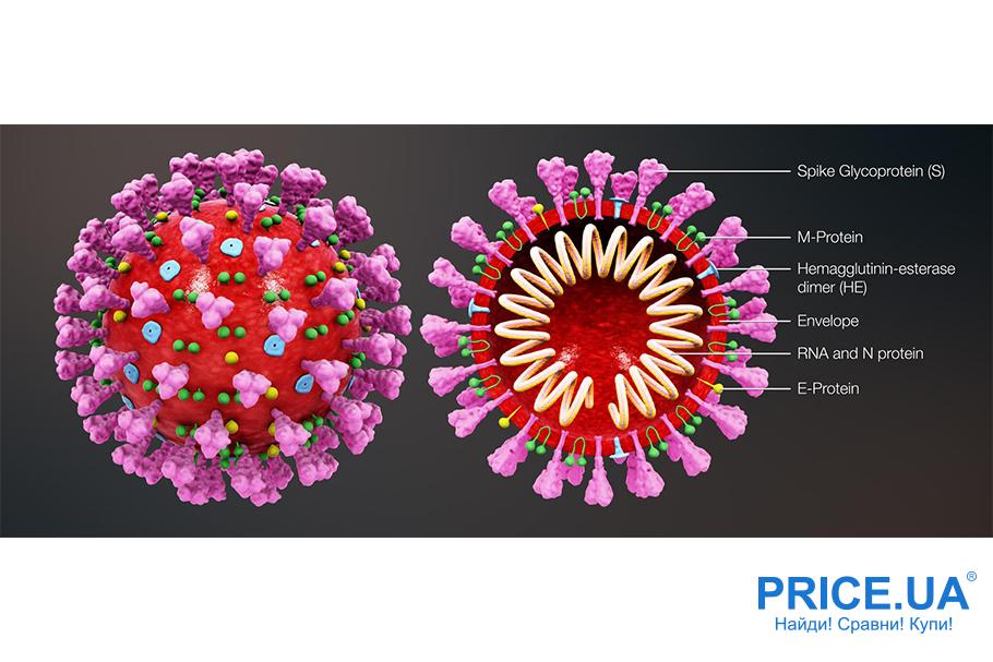 Происхождение коронавируса. Факты