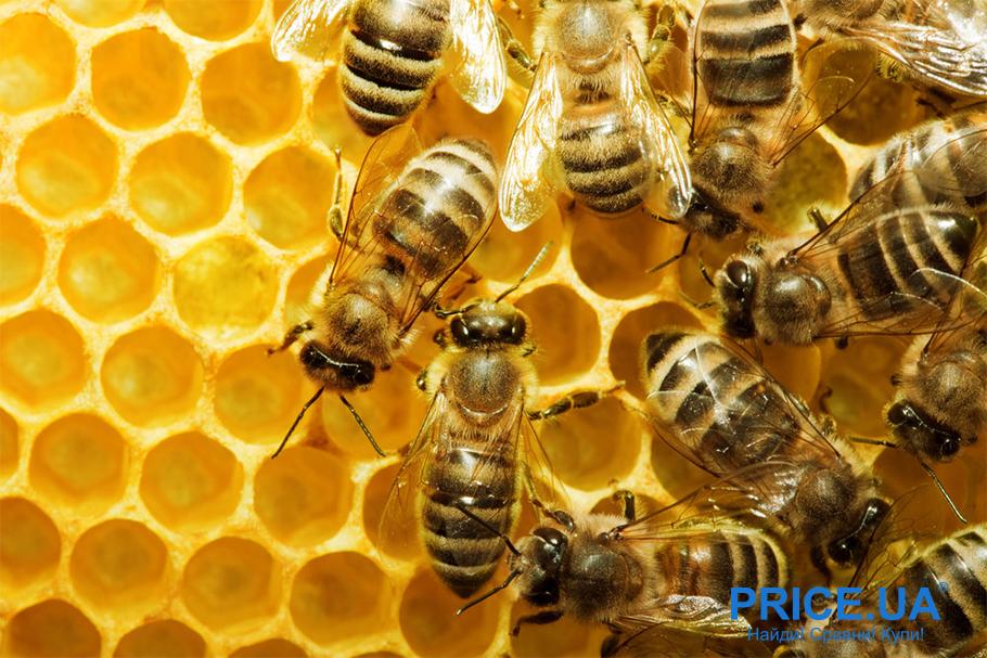 Как определить натуральный мед? Признаки вредного меда
